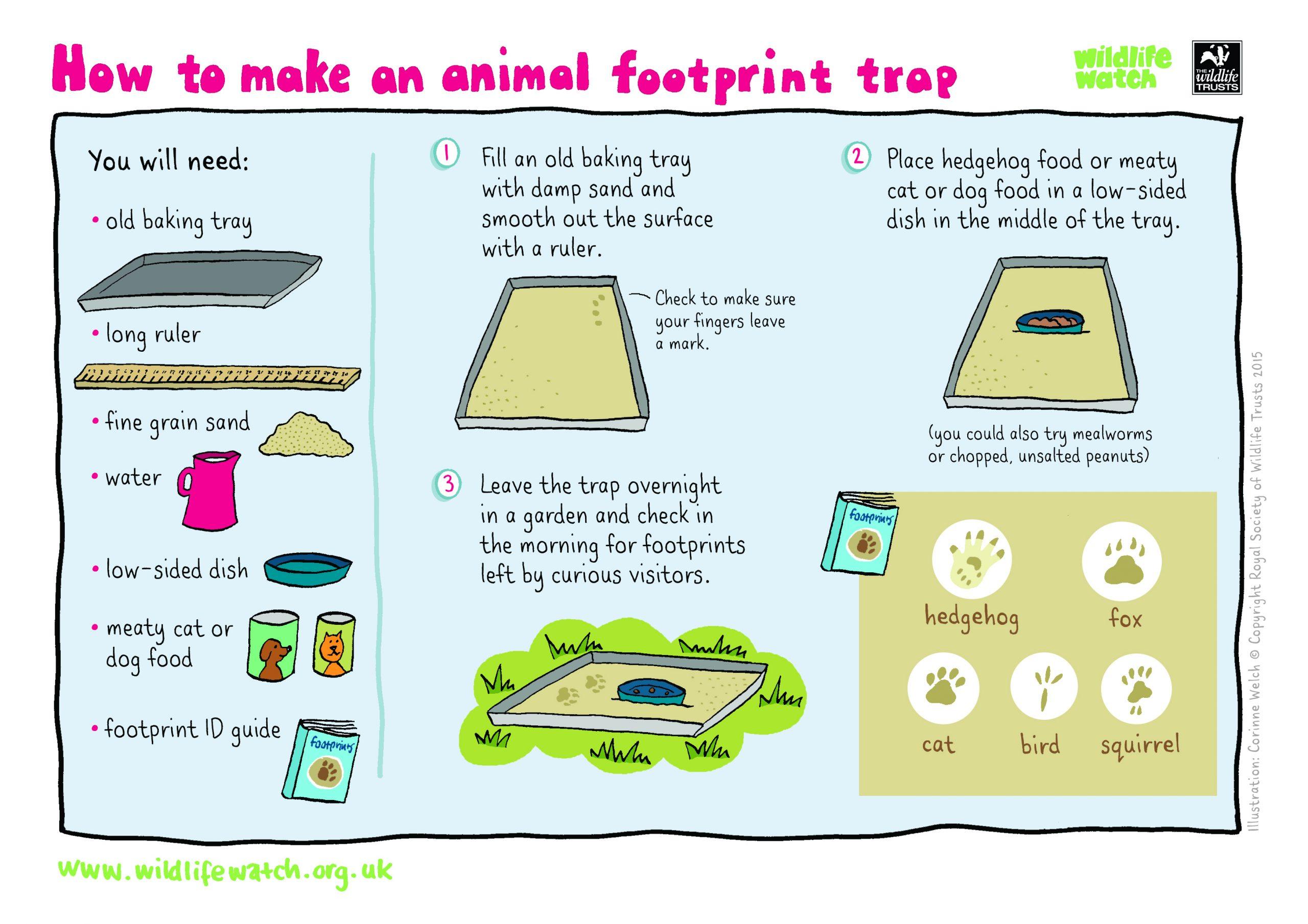 Animal Observation Worksheet | Printable Worksheets And