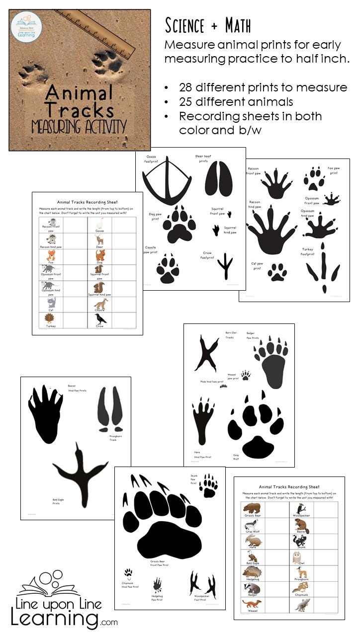 Animal Tracks Measuring Activity