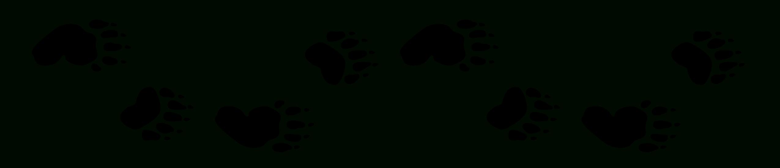 Free Bear Foot Print, Download Free Clip Art, Free Clip Art