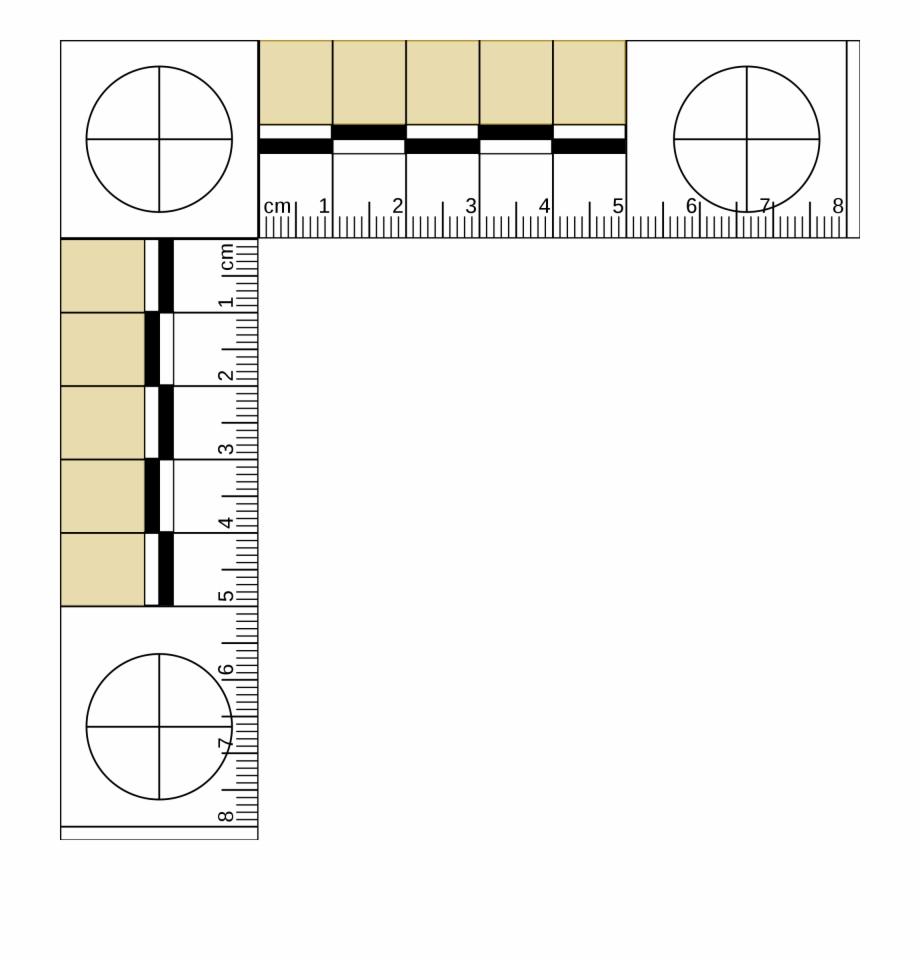 Mm Ruler Actual - Forensic Ruler | Transparent Png Download