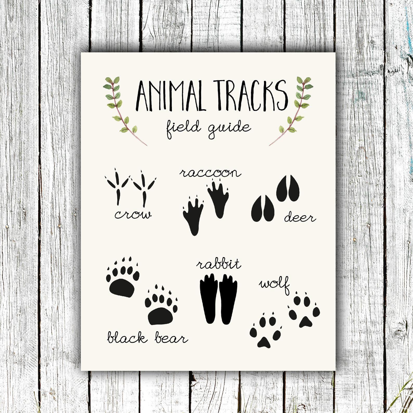 Nursery Art Printable, Animal Tracks Poster, Woodland