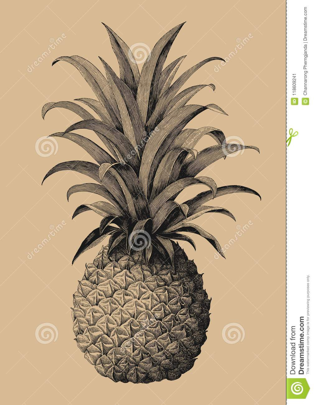 Pineapple Hand Drawing Vintage Engraving Style Stock Vector